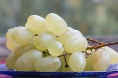 Белые виноградины с падениями росы стоковое изображение