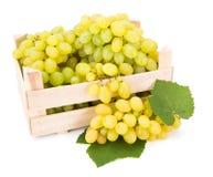 Белые виноградины таблицы (Vitis) в деревянной клети Стоковое Изображение RF