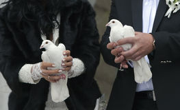 Белые голуби в руках Стоковое Фото