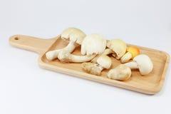 Белые грибы на предпосылке белизны подноса Стоковые Изображения RF