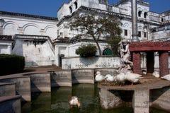 Белые гусыни плавая в солнце в фонтанах Стоковое Фото