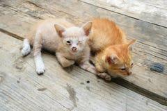 Белые глаза котенка закрыли одно Стоковые Фото