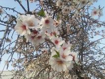 Белые дерево и цветки Стоковые Фотографии RF