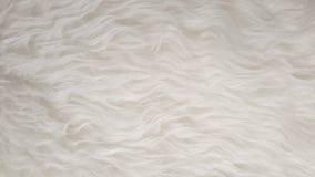 Белые естественные пушистые плоские овцы pet предпосылки текстуры кожи, материал для украшения дома ковра, кожаной текстильной пр Стоковое Фото