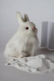 Белые зайцы игрушки в белой предпосылке Стоковое Фото