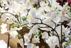 Белые искусственные исчерченные цветки или фаленопсис орхидеи Стоковое фото RF