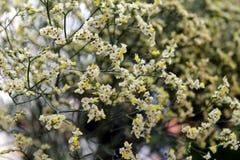 Белые и желтые цветки в букете на рынке Стоковые Изображения RF