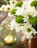 Белые и зеленые хризантемы Стоковые Фотографии RF