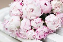 Белые и розовые пионы Предпосылка, обои Стоковая Фотография RF