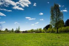 Белые козы пася на поле Стоковые Фото