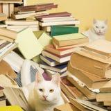 Белые коты и куча книг Селективный фокус стоковое изображение