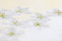 Белые малые цветки на воде желтый цвет картины сердца цветков падения бабочки флористический Свадьба, предпосылка весны Макрос Стоковые Фотографии RF