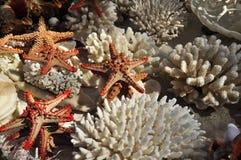 Белые морские звезды коралла и другая морская флора и фауна Стоковые Изображения