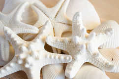 Белые морские звёзды Стоковые Изображения