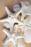 Белые морские звёзды Стоковая Фотография