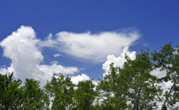Белые облака против панорамного голубого неба Стоковое Изображение