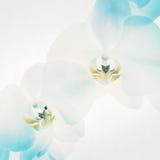 Белые орхидеи на свете - голубой предпосылке Стоковые Фото