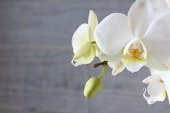Белые орхидея и бетон 6 Стоковая Фотография RF