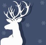 Белые олени Стоковое Изображение