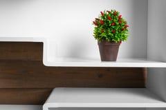 Белые полки и зеленое растение в баке Стоковые Изображения RF