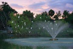 Белые птицы в дереве Стоковые Фото