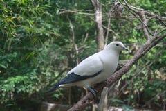 Белые птицы на ветвях Стоковые Фото