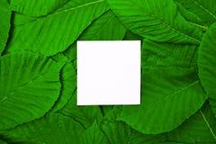 Белые пустые лист среди зеленых листьев каштана Стоковые Фото