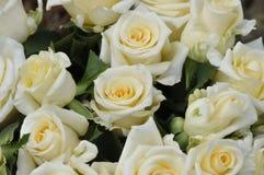 Белые розы Стоковое Изображение