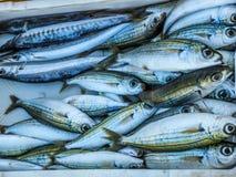 Белые рыбы Стоковое Изображение RF