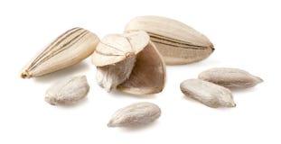 Белые семена подсолнуха белые Стоковые Изображения