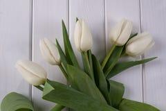 Белые тюльпаны на белой деревянной предпосылке Стоковое Изображение
