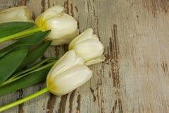 Белые тюльпаны на деревянном столе Стоковая Фотография RF