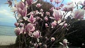 Белые фиолетовые цветки Стоковое Изображение