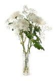 Белые хризантемы Стоковое Изображение RF