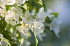 Белые цветки весной стоковая фотография