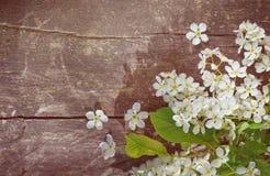 Белые цветки весны на старой древесине Стоковые Изображения