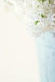 Белые цветки весны сирени Стоковые Изображения