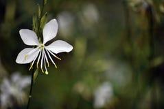 Белые цветки в городке Стоковое Изображение