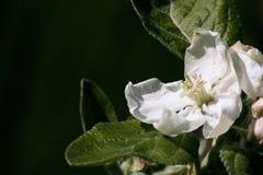 Белые цветки, лето приходят! Стоковое Фото