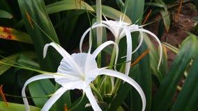 Белые цветки, зеленый цвет выходят красивый стоковое изображение rf