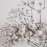 Белые цветки красивые Стоковые Изображения