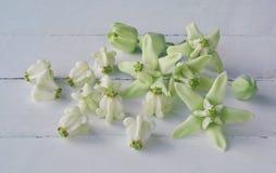 Белые цветки кроны Стоковые Фото