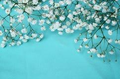 Белые цветки на голубой предпосылке Стоковое Изображение RF