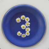 3, белые цветки на голубой предпосылке Стоковое Фото