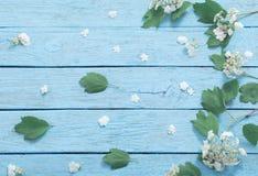 Белые цветки на деревянной предпосылке Стоковое Изображение RF