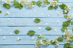 Белые цветки на деревянной предпосылке Стоковая Фотография RF