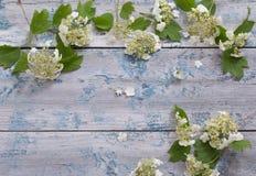 Белые цветки на деревянной предпосылке Стоковые Изображения RF