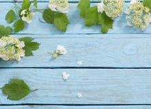 Белые цветки на деревянной предпосылке Стоковая Фотография