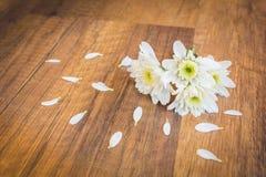 Белые цветки на земле с лепестком Стоковая Фотография
