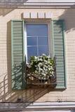 Белые цветки на окне в классическом стиле стоковое изображение